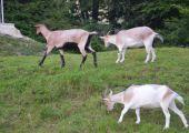 Rekreační středisko Beskydský H-RESORT - Mini Zoo